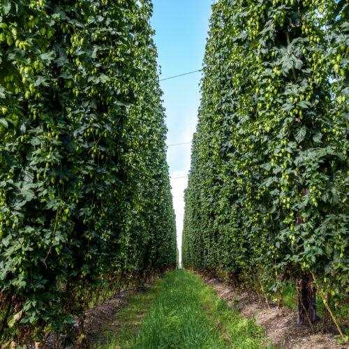 Cerveza Artesana y Medio Ambiente